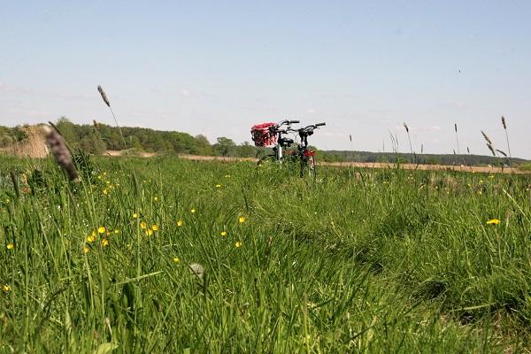 Abbildung zwei Fahrräder auf einer blühenden Blumenwiese an einem schönen Sommertag