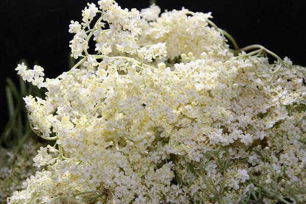 Hollerbusch-Blüten