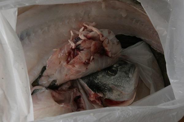 Foto Fischreste in einer weißen Plastiktüte