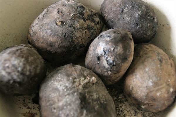 Kartoffeln im Holzfeuer gegart